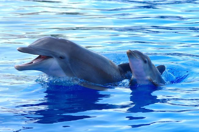 Marineland_Baby_Dolphin_Competition.jpg